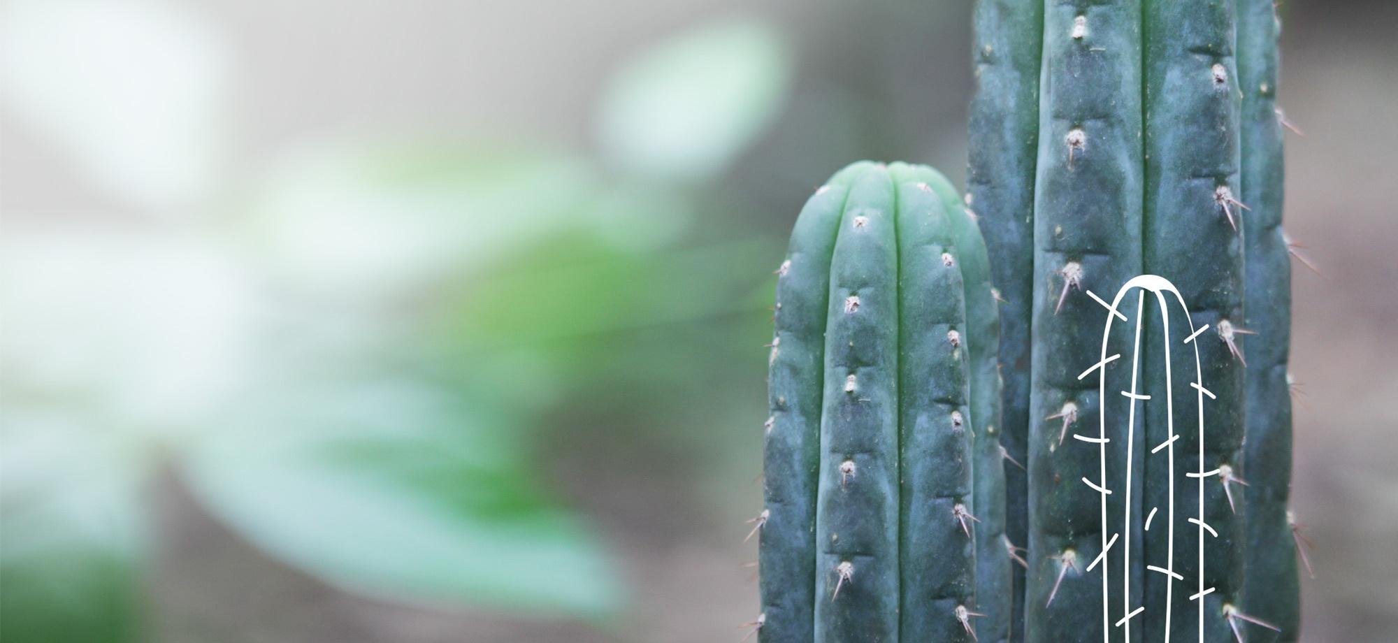 Plant Medicines & well-being Retreat - Vikara in Ecuador